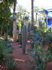 Succulent plants and cacti in Jardin Majorelle, Marrakech, Morocco
